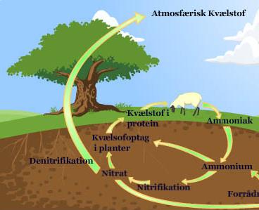 Undervisningsmateriale – Naturens kredsløb